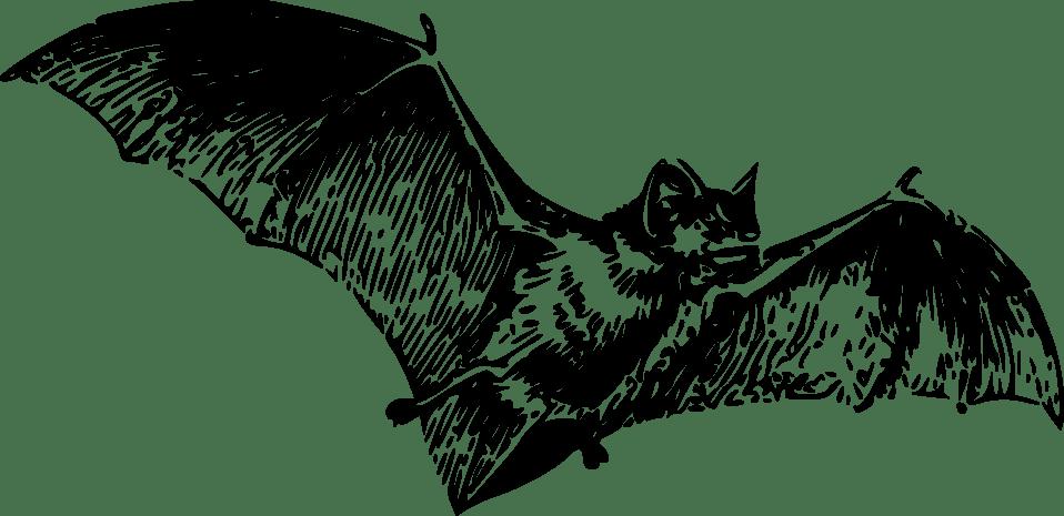 14961-illustration-of-a-flying-bat-pv