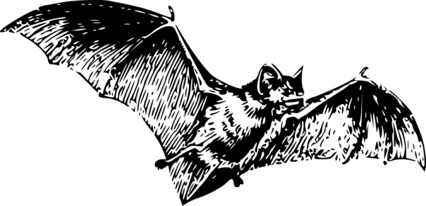 14961-illustration-of-a-flying-bat-pv